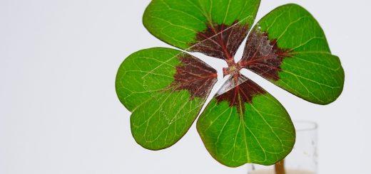 four-leaf-clover-1849858_1920